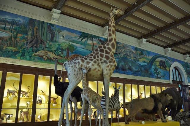 Museu de História Natural de Marselha