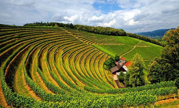 Vinícola de Borgonha